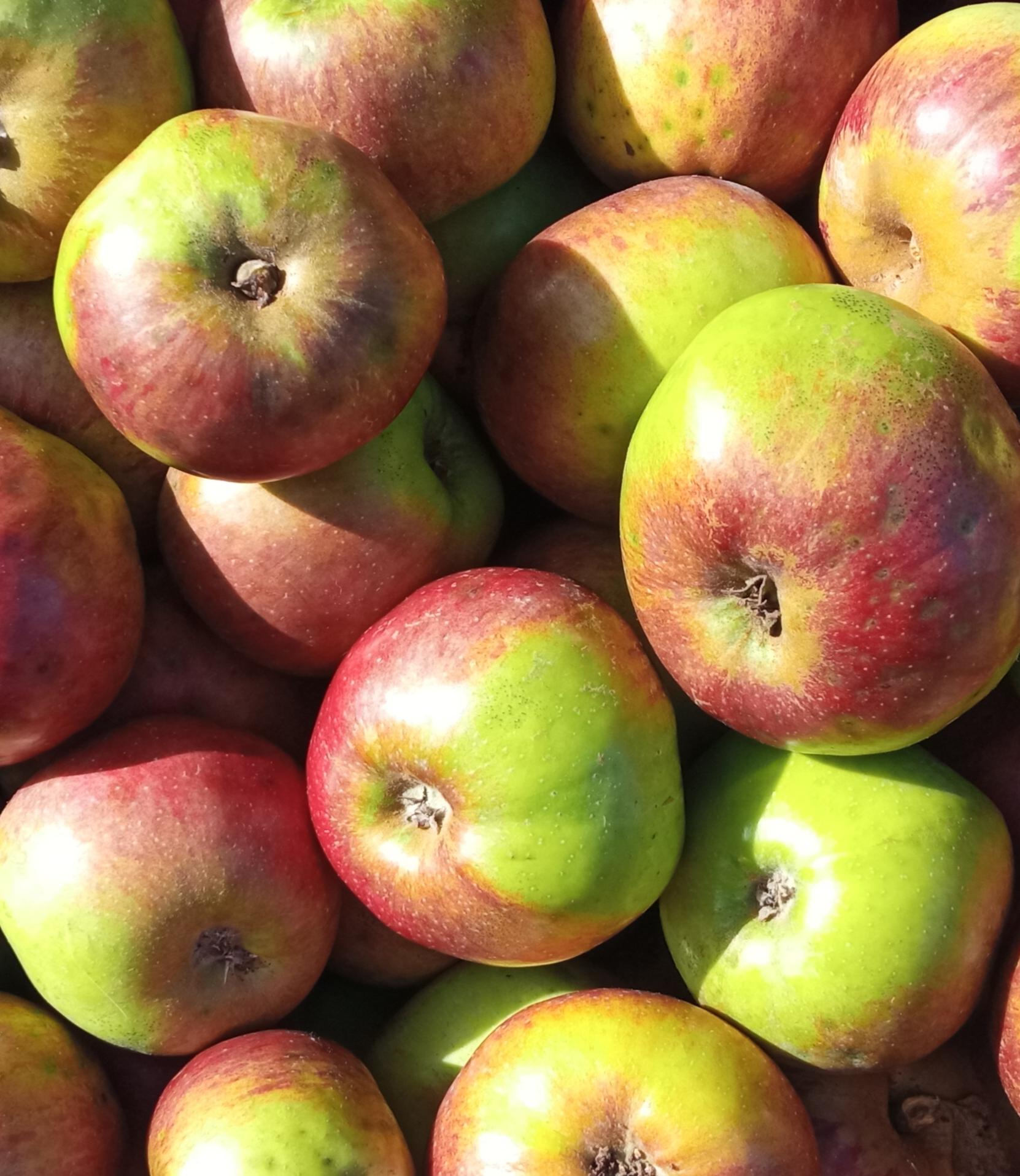 Manzana de mesa